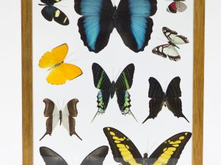 Framed Wall Art with Real Butterflies