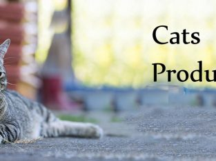 Pets Lovers | pets care