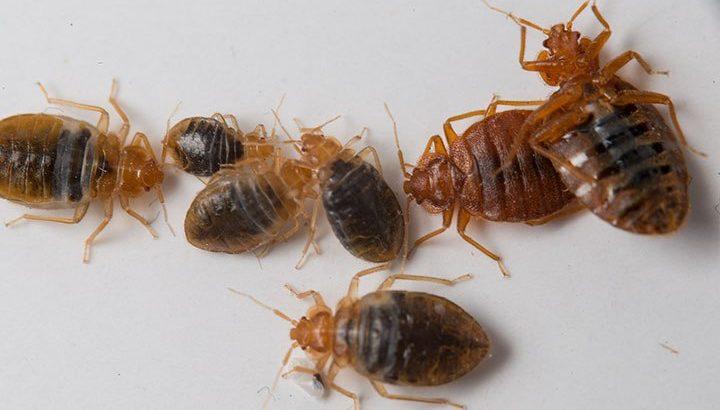 Rochester Pest control,Syracuse Pest control,Buffalo Pest control