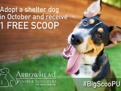 Residential Pooper Scoopers AZ