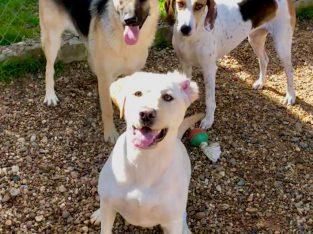 Pet Training Montgomery