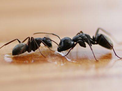 Termites Control Melbourne