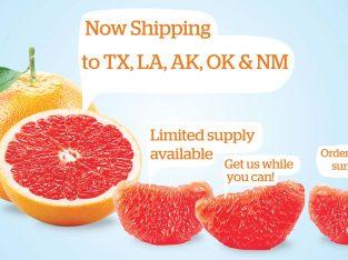 Winter Sweetz Home | Texas Red Grapefruit