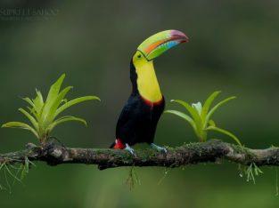 costa rica bird photo tours