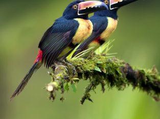 texas bird photo tours