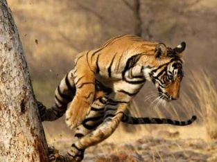 Free Guide for Top Wildlife Trips to India