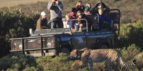 Wildlife Conservation Educational Experience