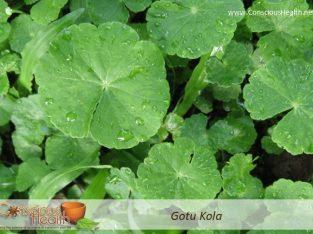 Gotu Kola Superfood | Ayurvedic Cooking Class