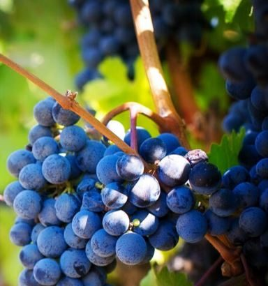 Create Your Own Adventure With High-End Wine Tours With Tango Tours