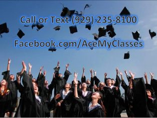 Essay Online Class Homework & More