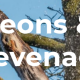 Tree Surgeons & Surgery