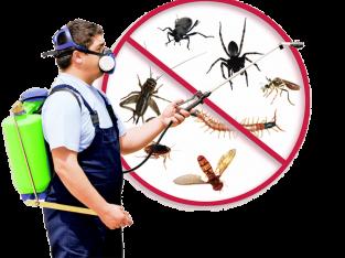 Pest control Fulham