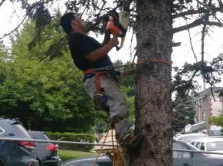 Flores Landscaping Tree Services