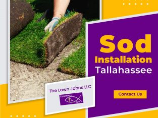 Are You Looking for lawn's renovation and sodding services?