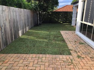Has your yard turned into a forest? New turf yes please.