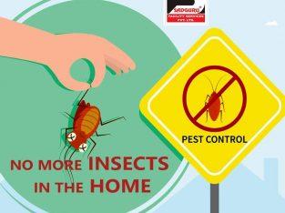 Pest Control Services in Kandivali– Sadguru Pest Control