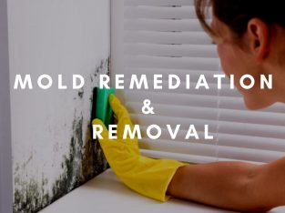 Mold Remediation and Removal For Lauderdale FL