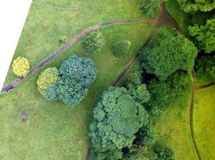 Arboricultural Assessment Auckland