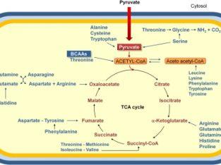 Bile Acid Metabolites Library of Standards