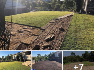 320m2 of Empire Zoysia with wifi controlled automatic irrigation system for lawn and gardens