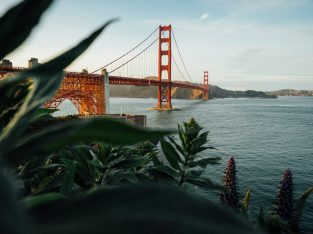 Find the Cheapest flight to San Francisco, California