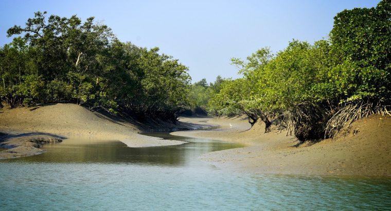 2 Night 3 Days Sundarban Tour From Kolkata